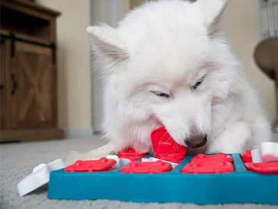 Puzzle-Game-Dog-Toys