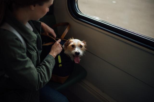 Dog Travel Gears
